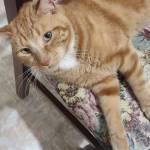 ugo cellucci Profile Picture